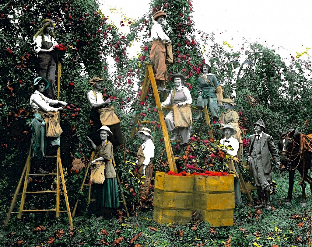 Vintage Orchard Workers