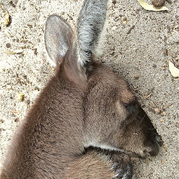 Sleeping on Warm Sand